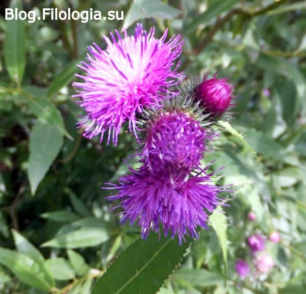 цветы на фото/3241858_flowers2 (600x575, 262Kb)