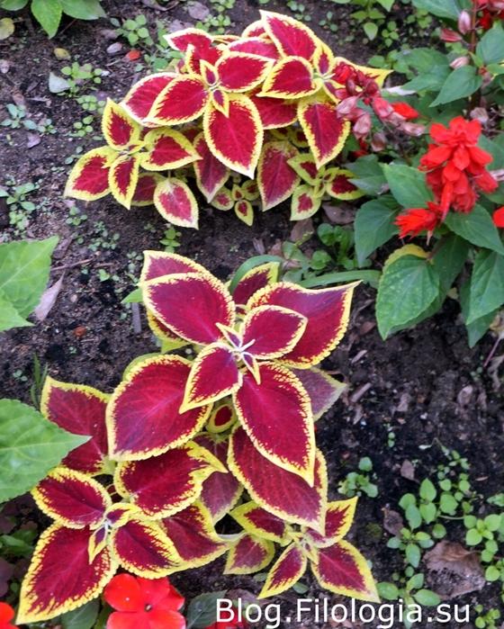 Красивые яркие цветы/3241858_flowers6 (560x700, 384Kb)