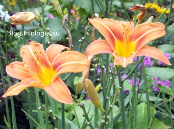 Цветы в природе/3241858_flowers10 (600x444, 210Kb)