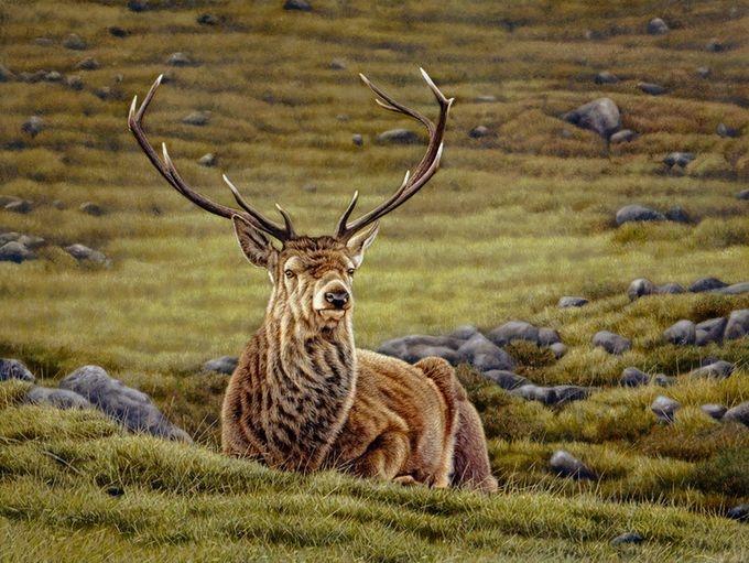 животные в картинах художников Эрик Уилсон 9 (680x511, 247Kb)