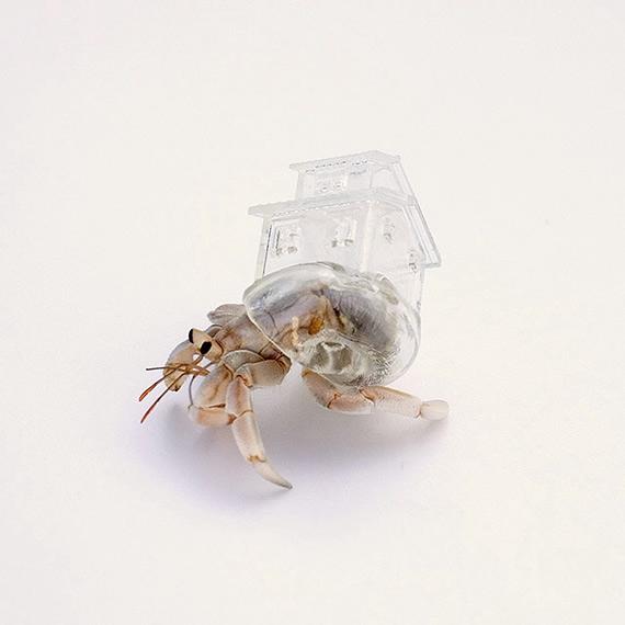 домики для раков-отшельников фото 7 (570x570, 79Kb)