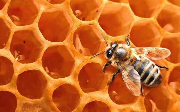 7 целебных медов Медового Спаса