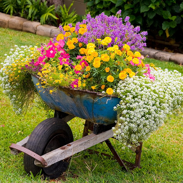 garden-flowers-mix-in-container (700x700, 227Kb)