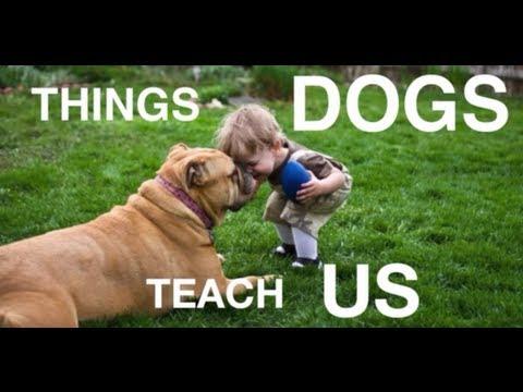 Собаки, которые учат нас жить