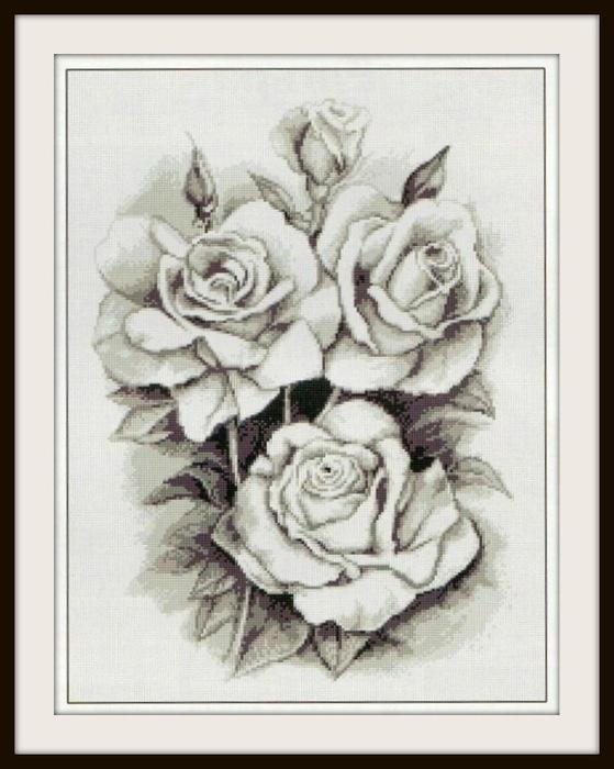 розы (559x700, 96Kb)