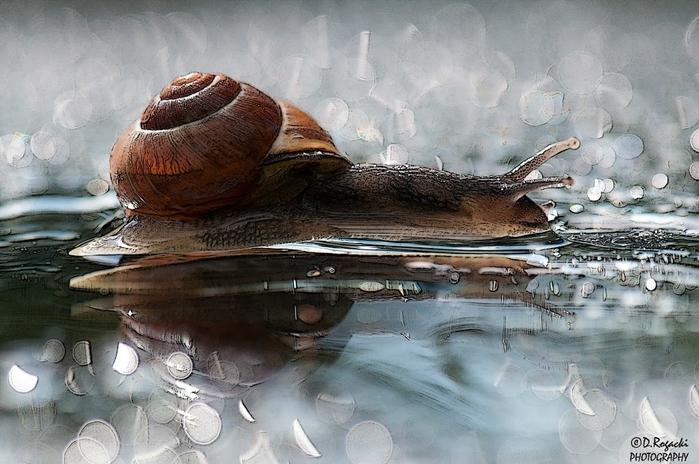 DSC_4563-snail (700x464, 257Kb)