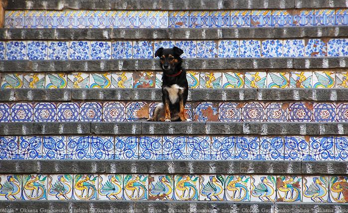 лестница Санта-Мария-дель-Монте сицилия 15 (700x428, 580Kb)