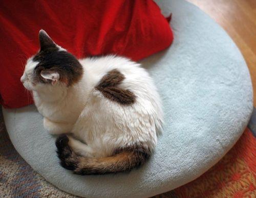 сердечные кошки2 (500x388, 90Kb)