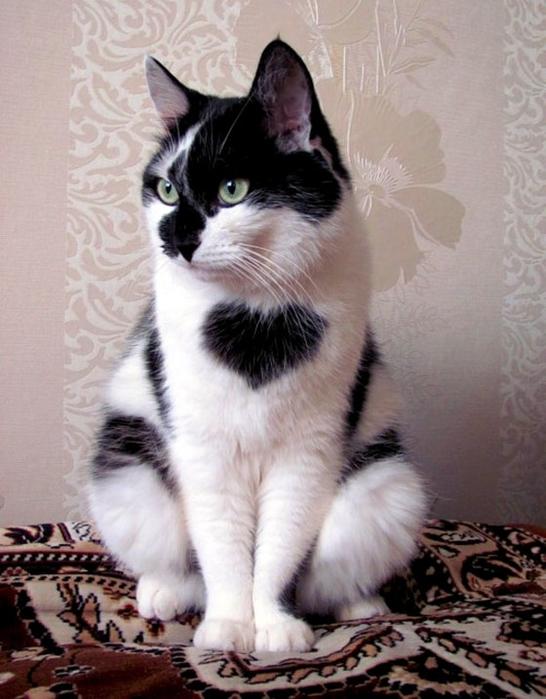 сердечные кошки5 (546x700, 247Kb)