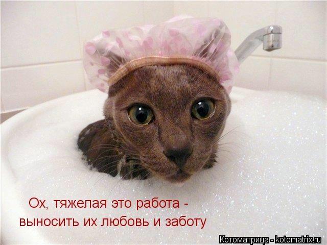 kotomatritsa_3 (640x480, 119Kb)