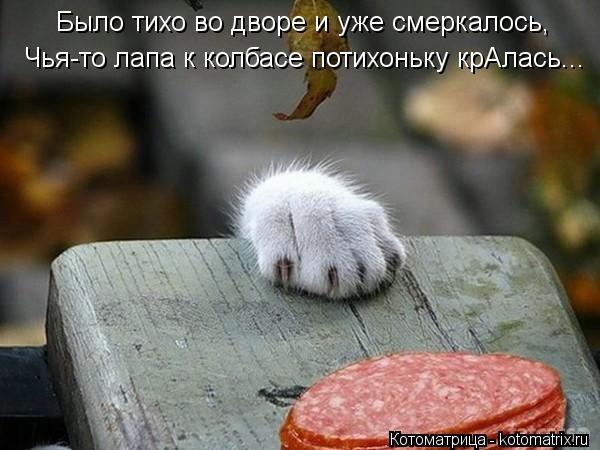 kotomatritsa_PY (600x450, 113Kb)