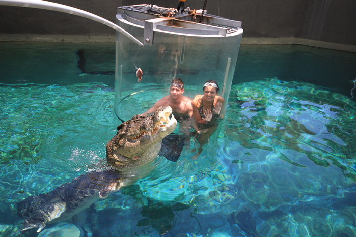 аттракциона бухта крокозавра австралия (700x466, 500Kb)