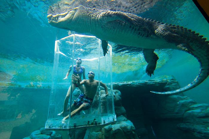 аттракциона бухта крокозавра австралия 3 (700x466, 473Kb)