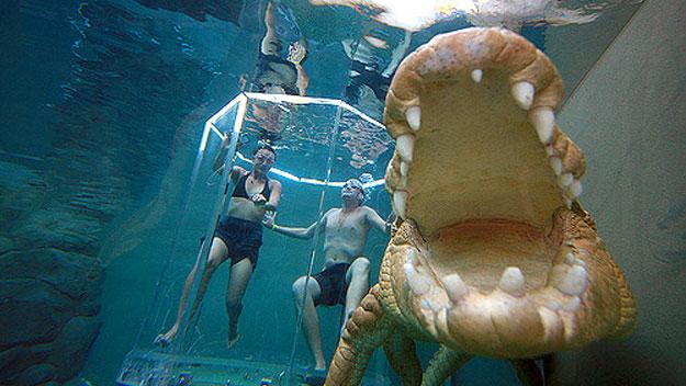 аттракциона бухта крокозавра австралия 5 (625x352, 252Kb)