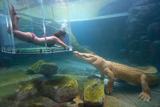 аттракциона бухта крокозавра австралия 7 (552x368, 155Kb)