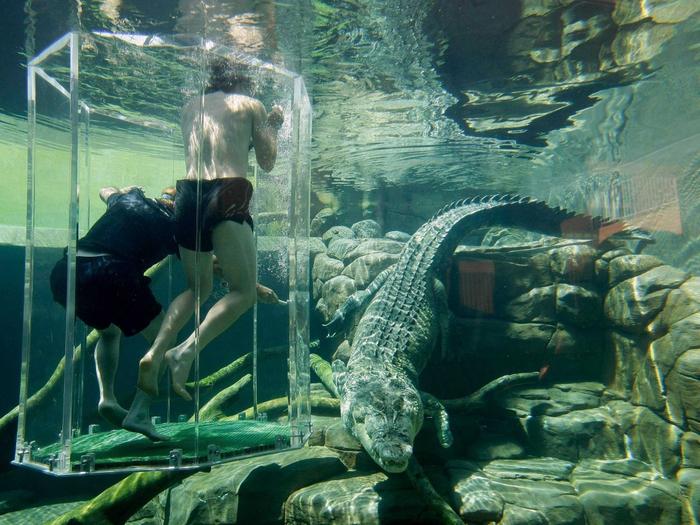 аттракциона бухта крокозавра австралия 8 (700x525, 467Kb)