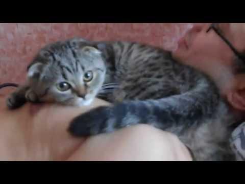 Кошка очень любит своего хозяина