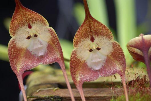 Самые экзотические растения мира! Невероятные цветы!