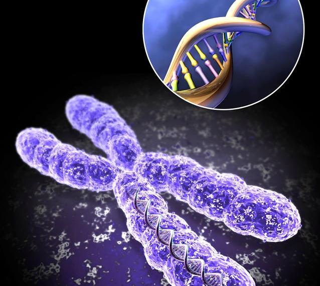 DNK (638x571, 231Kb)