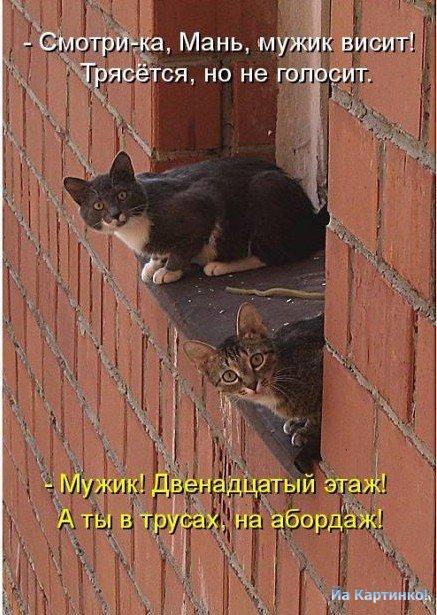 1264040669_foto-koshek-i-kotyat-ykk-05 (437x615, 83Kb)