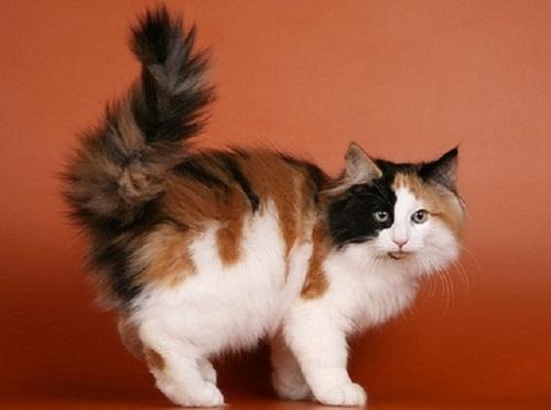 Такие кошки (именно кошки,