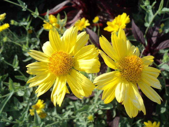 летние цветы 2 (700x525, 478Kb)
