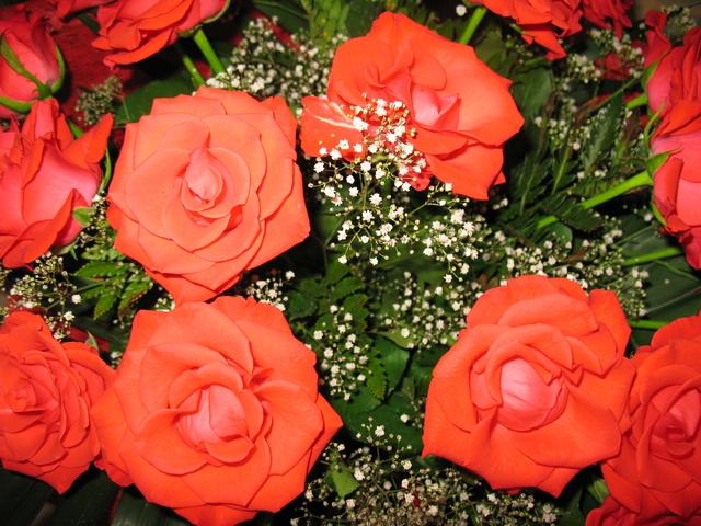 летние цветы 4 (640x480, 484Kb)