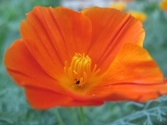 летние цветы 6 (640x480, 291Kb)