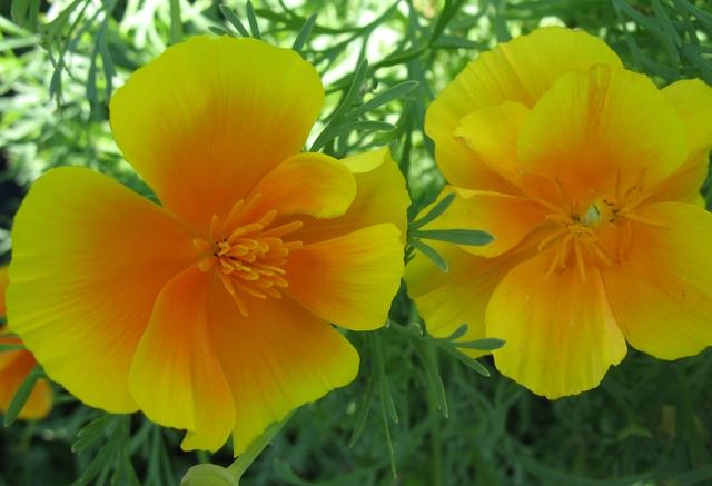 летние цветы 8 (640x437, 284Kb)