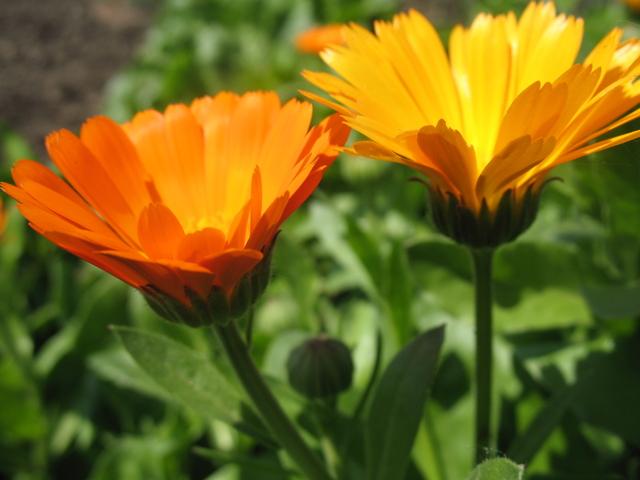 летние цветы 20 (640x480, 329Kb)