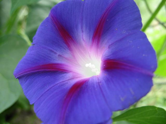 летние цветы 22 (640x480, 320Kb)