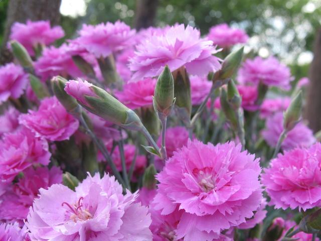 летние цветы 26 (640x480, 379Kb)