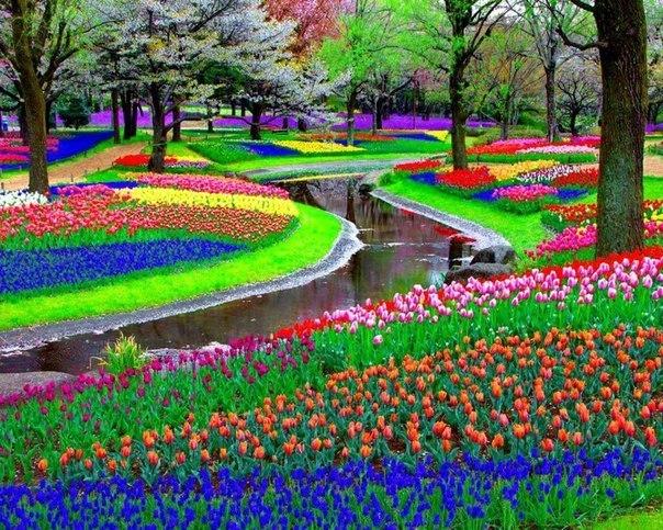 Королевский парк цветов Кёкенхоф, Нидерланды (604x483, 140Kb)