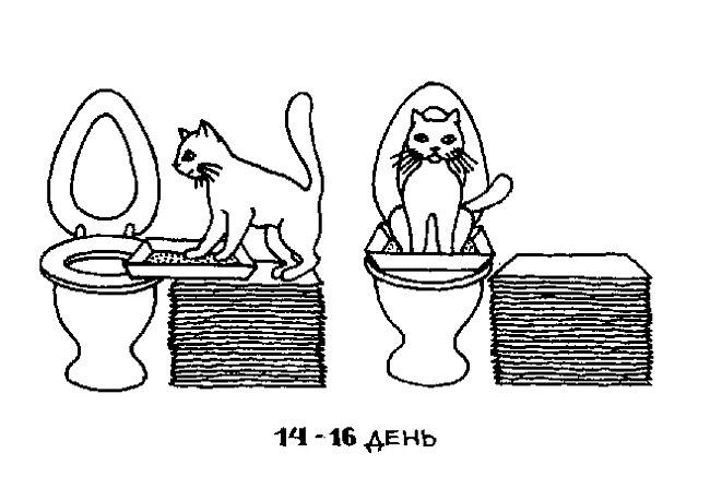 Убедитесь, что кот исправно