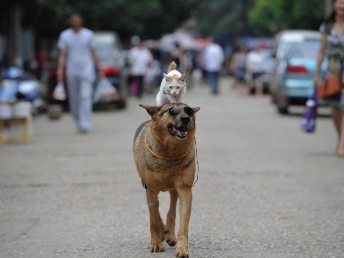 смешные животные фото 2 (680x510, 188Kb)