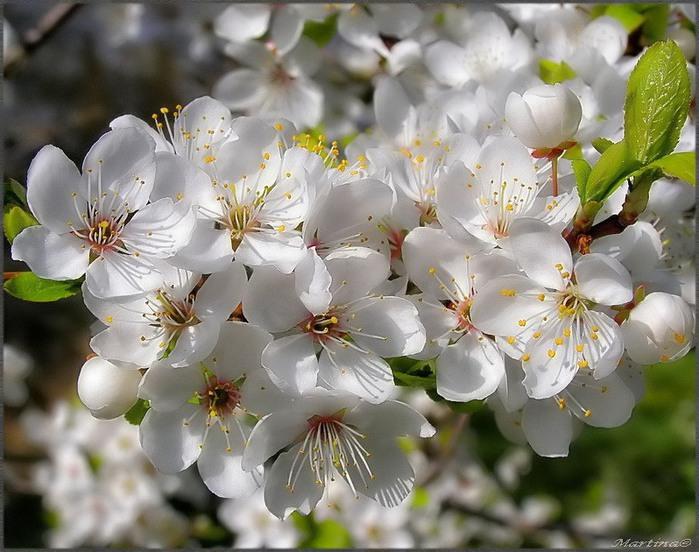 От весны и до весны!/4059776_0_3a051_424aa5e1_XL (700x552, 116Kb)