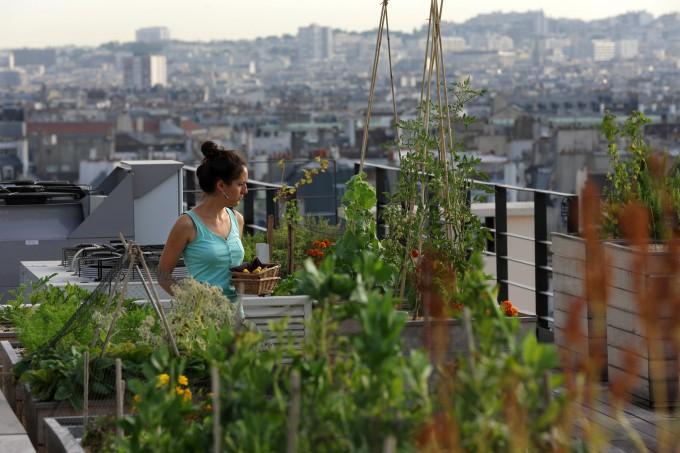огород на парижской крыше фото 1 (680x453, 286Kb)