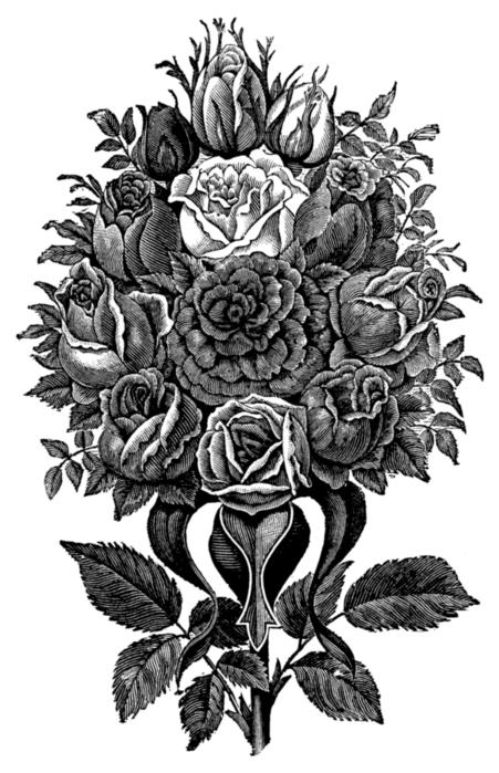 78847093_large_roses084 (451x699, 196Kb)