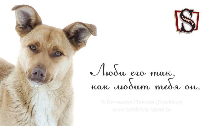афоризмы о собаках, все о собаках, высказывания о собаках, дружба собаки, за что мы любим собак, как любит собака, как любит тебя он, люби его так, люби его так как любит тебя он, любовь к собакам, любовь к собаке, собака лучший друг/1377541148_Sredstva_0036 (700x406, 67Kb)