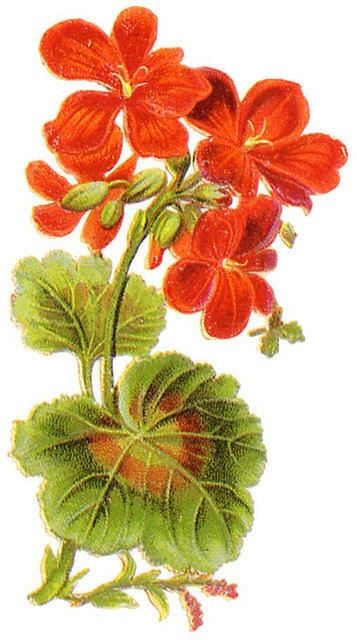 Flowers346 (357x640, 151Kb)