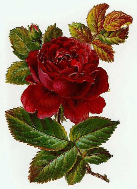 Flowers105 (466x640, 203Kb)