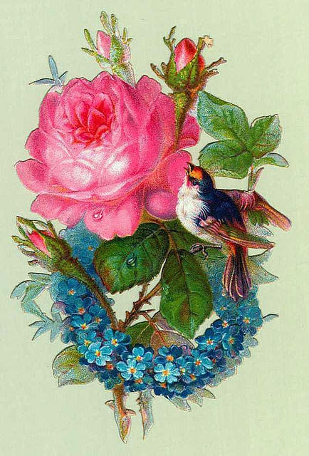 Flowers109 (434x640, 224Kb)