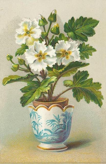 Flowers113 (414x640, 226Kb)