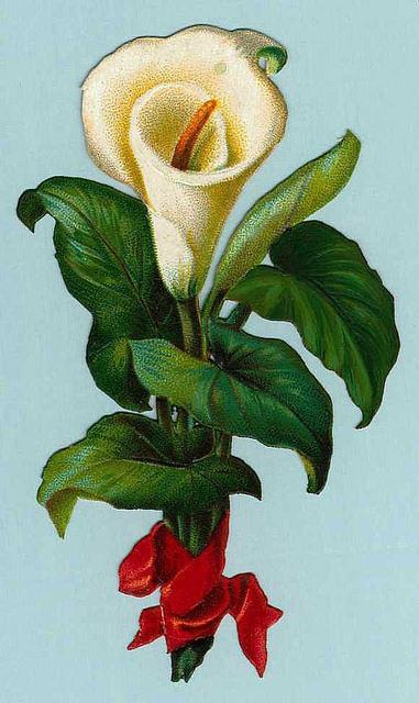 Flowers114 (381x640, 158Kb)