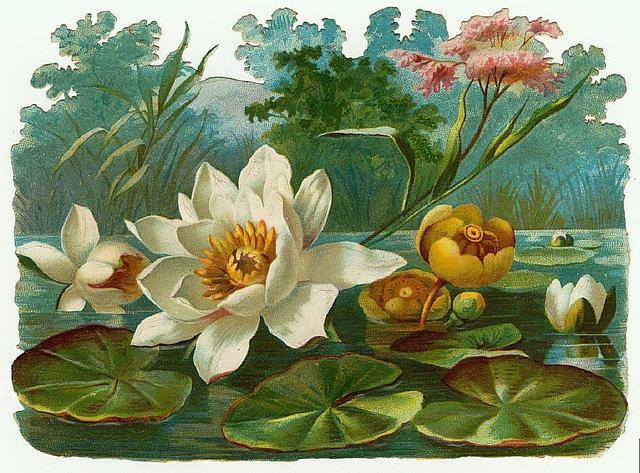 Flowers119 (640x473, 294Kb)