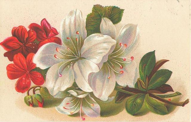 Flowers120 (640x410, 210Kb)