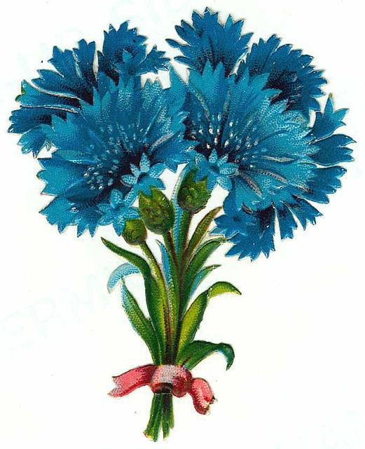Flowers130 (521x640, 199Kb)