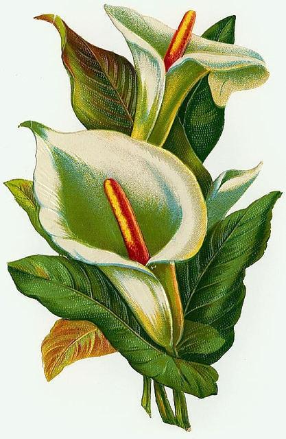 Flowers138 (417x640, 199Kb)