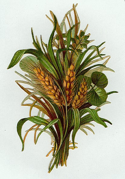 Flowers164 (413x592, 182Kb)