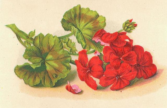 Flowers169 (640x416, 194Kb)